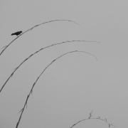 A Bird Photo By: Hemant Chauhan